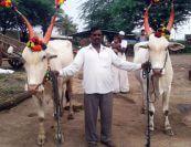 santaji jagnade maharaj palkhi sohala bail jodi